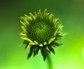 Super macro photo of flower Royalty Free Stock Photo