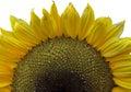 Super macro photo of flower.Sunflower Royalty Free Stock Photo