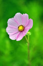 Super macro shot of flower for beautiful background Royalty Free Stock Photo