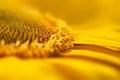 Super Macro Yellow Flower Back...