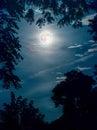 Super Moon Framed By Tree Bran...