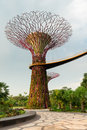 Super tree in gardens by the bay singapore artificial supertree as a vertical garden at Stock Photography