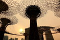 Super trees in Gardens by the Bay Singapore Royalty Free Stock Photography