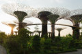 Super trees in gardens by the bay singapore silhouette of artificial supertree grove as a vertical at Stock Photo