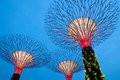 Super Trees in Singapore Stock Photo