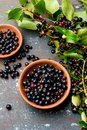 Superfood MAQUI BERRY. Superfoods antioxidant of indian mapuche, Chile. Bowl of fresh maqui berry and maqui berry tree Royalty Free Stock Photo