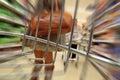 Supermarket trolley rage Royalty Free Stock Photo