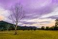 Supernatural dead tree in green field scenery Stock Image