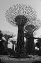 Supertrees at the garden bays in singapore people visit Stock Photo