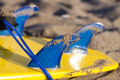 Surf board fins shot of boards with Royalty Free Stock Photo