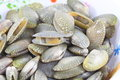 Surf clam raw from the seafood market Stock Photography