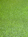 The surface is covered with green duckweed. Royalty Free Stock Photo