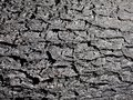 A surface of fissures and rough textures Royalty Free Stock Photo