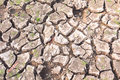 Surface of a grungy dry cracking parched Royalty Free Stock Photo