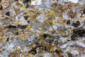 Surface of old stone with yellow green moss the Royalty Free Stock Image