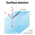 Surface tension iron needle stay atop the liquid because of if the needle were placed point down on the Stock Photo