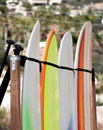 Surfboard rental four surfboards lined up ready for use Royalty Free Stock Images