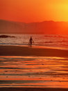 Surfer with a boogie board entering sea at sunset Stock Images