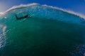 Surfer Submerged Wave Dolphins Royalty Free Stock Photography