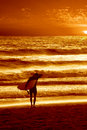 Surfista do por do sol Fotografia de Stock Royalty Free