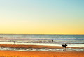 Surfpoint at sunset, Portugal Royalty Free Stock Photo