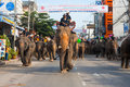 Surin Elephants Roundup Parade Downtown Royalty Free Stock Image
