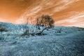 stock image of  Surreal alien landscape