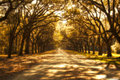 Surreal ghostly tree covered road Royalty Free Stock Photo