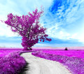 Surreal landscape and tree dreamscape road through the fields Stock Photo