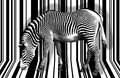 Surreal zebra high key in black and white Royalty Free Stock Photography