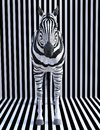Surreal Zebra Stripes, Wildlife Animal, Nature Royalty Free Stock Photo