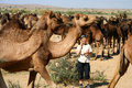 Surrounded by camels Royalty Free Stock Image