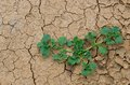 The survival last plants in dryness land Royalty Free Stock Photos