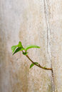 Survival of plant new germinates from the crack concrete wall persistence Stock Photography