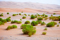 Surviving plants on the sand dunes of liwa oasis united arab emirates Royalty Free Stock Image