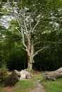 Surviving Tree Stock Image