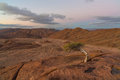 Surviving tree in harsh environment richtersveld south africa Royalty Free Stock Photo