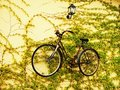 Suspended bicycle women s rusty old on yellow wall with vines Stock Photography