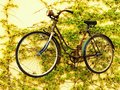 Suspended bicykle women s rusty old bicycle on yellow wall with vines Royalty Free Stock Image