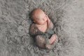 Swaddled, Sleeping Newborn Baby Boy Royalty Free Stock Photo