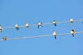 Swallows wire sitting on a against a blue sky rural Stock Image