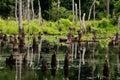Swamp Royalty Free Stock Photos