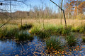 Swamp in autumn Royalty Free Stock Photo