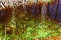 Swamp, bog, marsh, mire, wetland, fen, morass, quagmire, slough, marshland Royalty Free Stock Photo