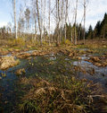 Swamp in eastern europe spring time Stock Photo
