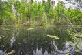 Swamp in forest under gloomy sky Stock Images