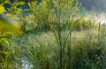 Swamp greenery