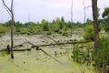 Swamp Habitat Royalty Free Stock Photo