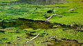 Swamp pond water green nature Royalty Free Stock Photography