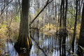 Swamp in South Carolina Royalty Free Stock Photos